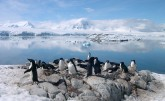 Group of penguins standing on a rocky shore