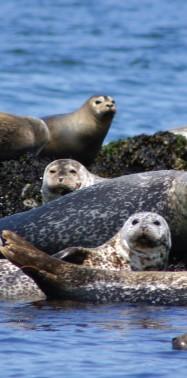 Tackling a Hidden Threat to Marine Mammals