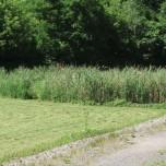 Minoa Wastewater Treatment Facility wetland photo