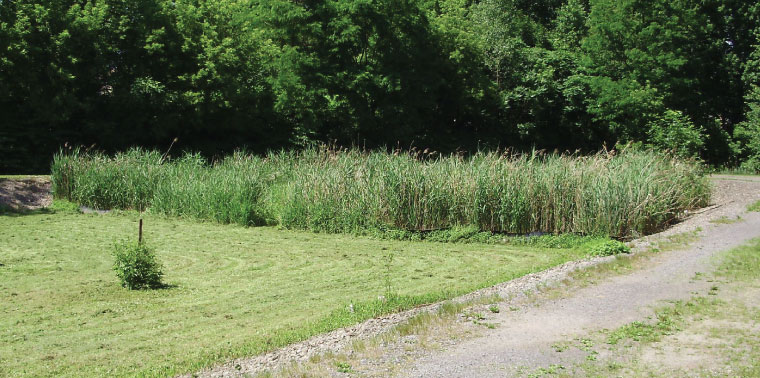 Minoa Wastewater Treatment Facility wetland photo