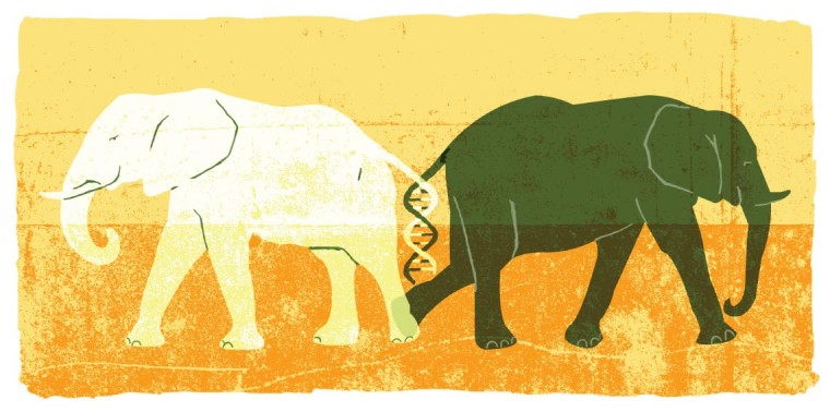 Elephant DNA illustration