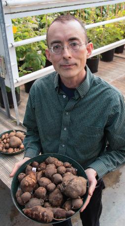 Steven Cannon with potato beans