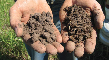 Soil below annual wheat versus wheatgrass field