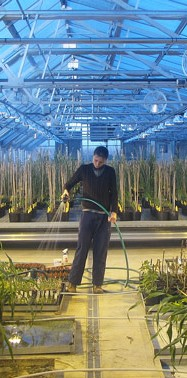 Pursuing the Promise of Perennial Grains