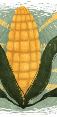 OPINION: It's Time to Rethink America's Corn System