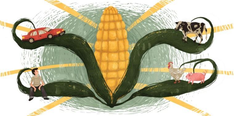America's corn system