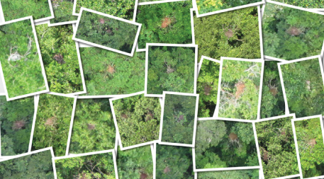 Collage of orangutan nest photos taken from conservation drone
