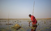 Fisherman in Bangweulu