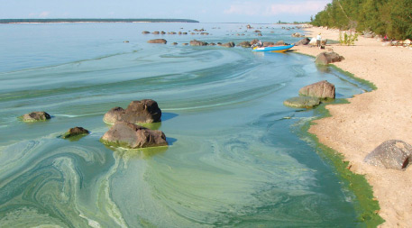 Algae on Lake Winnipeg