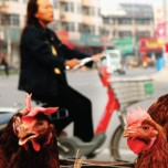 Chickens and humans in China