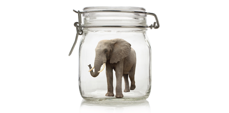 African elephant in a preserves jar