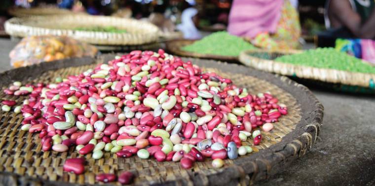 Documenting the impact of improved climbing beans in Rwanda