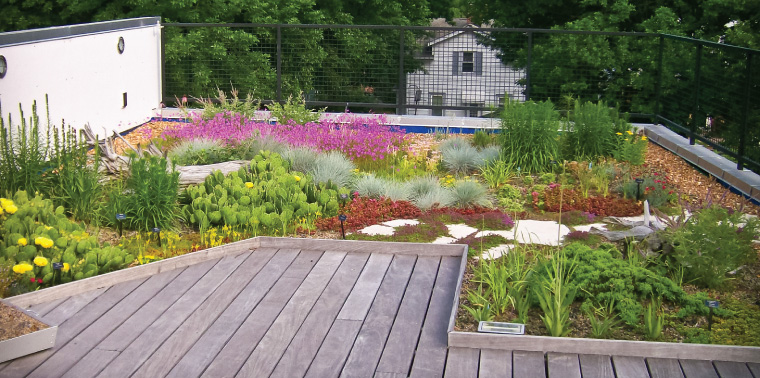 SWT Design green roof