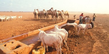 New Hope for the World's Driest Regions