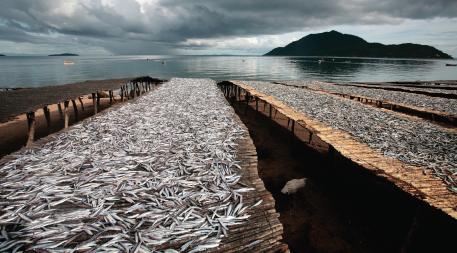 Usipa fish drying along the shores of Lake Malawi