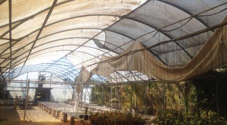 Buena Park greenhouse