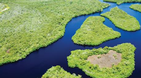 Storm-buffering mangroves line a southern Florida coastline.