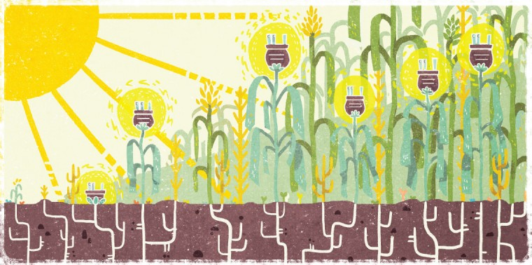 Farmland with conceptual electrical plug blooms
