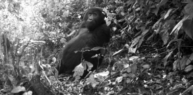 Tropical Wildlife Caught on Camera