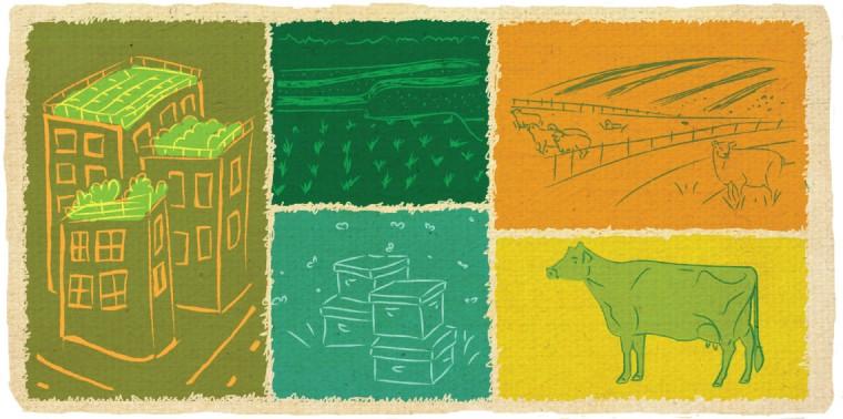 Rooftop gardens, rice paddys, backyard beekeeping, shepherding sheep, Canadienne cattle
