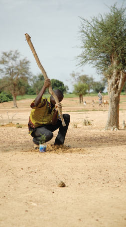 Planting a tree in the Sahel
