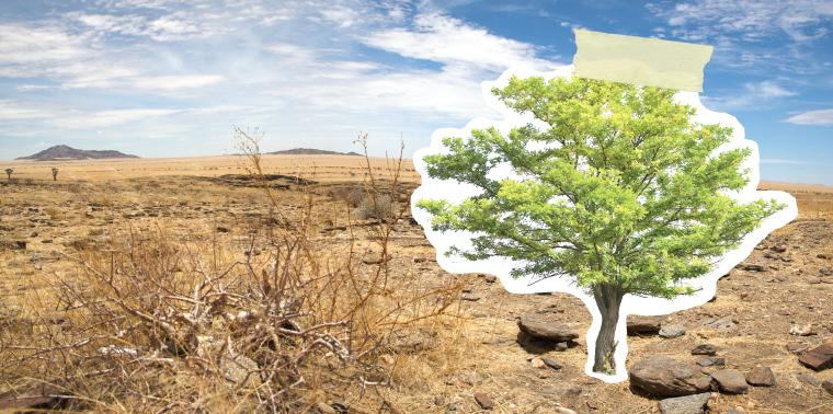 Acacia tree taped to desert scene