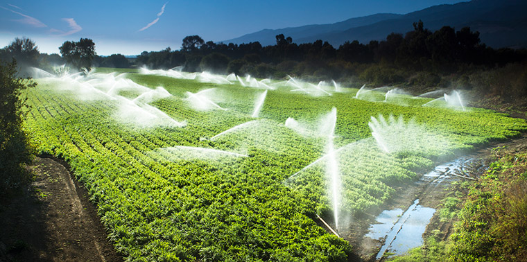 Crop irrigation in California's Central Valley