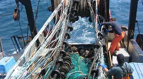Eliminator trawl