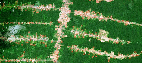 Deforestation along roads in Rondônia, Brazil