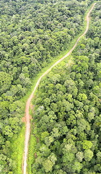 A road through the forest in Sabah, Malaysia