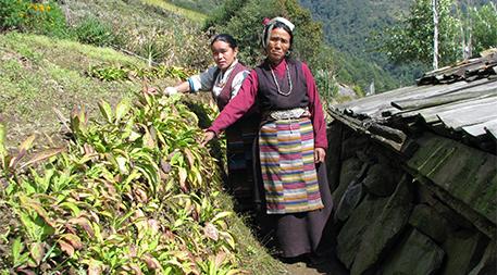 Rinen Bhote in her chiraito farm