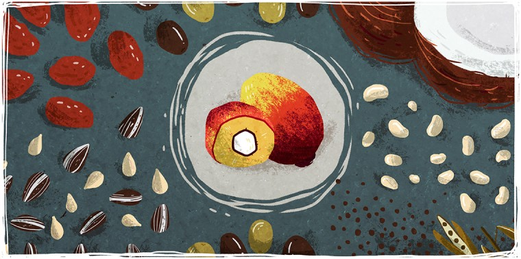 Palm oil fruit surrounded by dates, sunflower seeds, olives, rapeseed, soybeans and coconut
