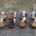 Varieties of rice seed from Debal Deb's farm