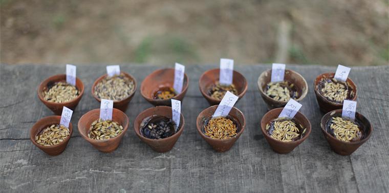 Varieties of rice seed from Debal Deb's farm