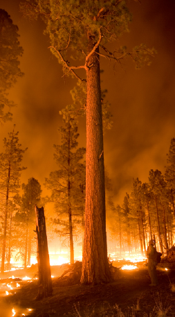 Whitewater-Baldy Complex forest fire