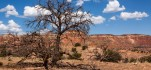 Dead juniper tree in New Mexico near Ghost Ranch