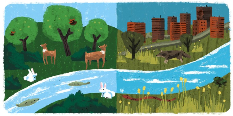 Two scenes with varied wildlife and nature versus buildings