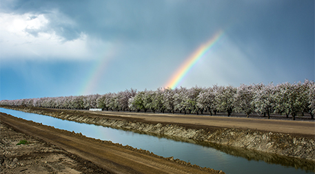 Rainbow over almond orchard