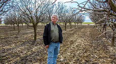 Fourth-generation farmer Chris Hurd surrounded by pistachio trees