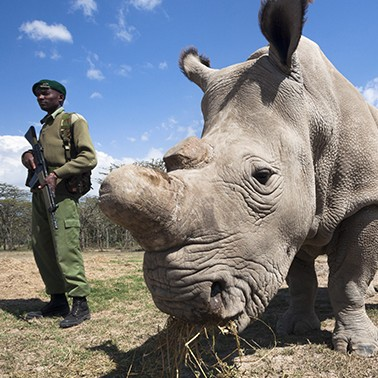 Welcome to the wild world of rhino conservation