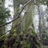 The 11 most important forests in the world