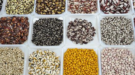 Bean diversity at CIAT