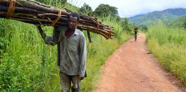 To everyone's surprise, forests are returning to Malawi. Here's why.