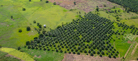 In Honduras small plantations dominate, with 87 percent of oil palm farmers there growing the crop on fewer than 50 hectares (124 acres). iStock photo © Robert_Ford