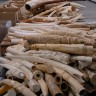 Previous elephant killing spots offer clues to stem future deaths