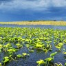 Phosphorus runoff is a big problem, but Florida is getting closer to a solution