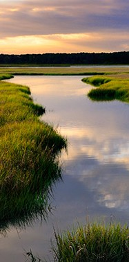 Can software save salt marshes?
