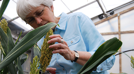 Peggy Lemaux with sorghum
