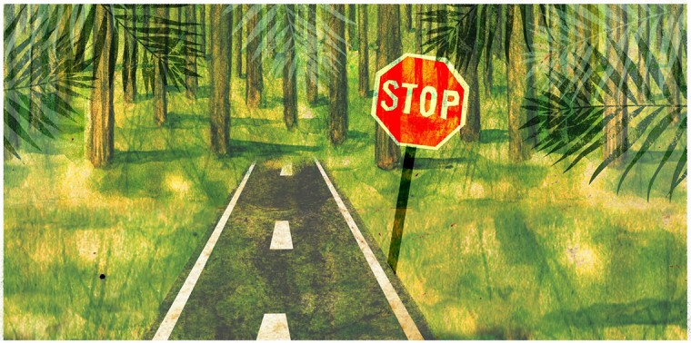 Road leading to the rain forest with stop sign in front