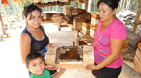 Women with native stingless bees